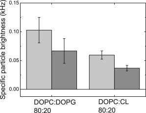 The Role of Lipids in VDAC Oligomerization - ScienceDirect