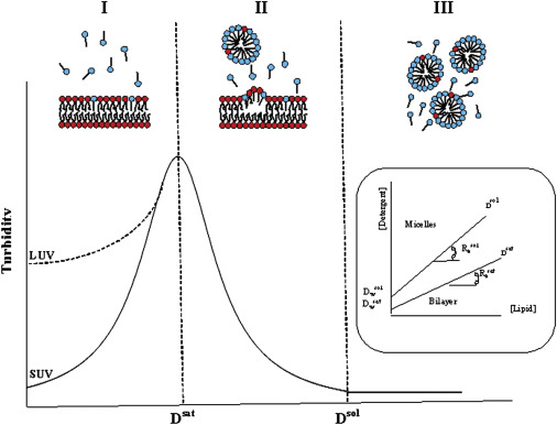 The Mechanism Of Detergent Solubilization Of Lipid Bilayers