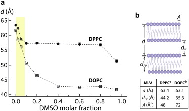 DMSO Induces Dehydration near Lipid Membrane Surfaces