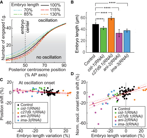 Microtubule Feedback and LET-99-Dependent Control of Pulling