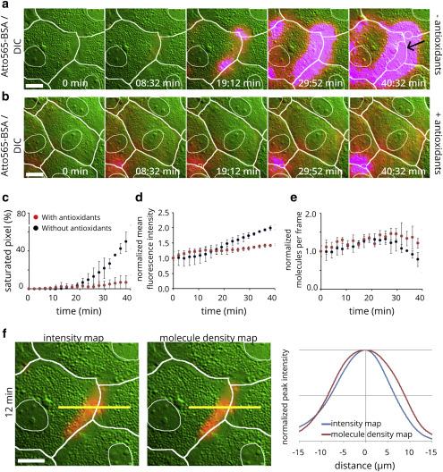 A Novel Microscopic Assay Reveals Heterogeneous Regulation