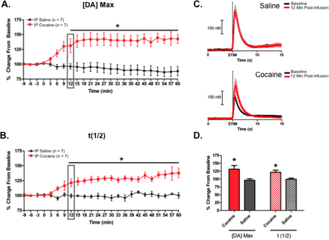 Regional influence of cocaine on evoked dopamine release in