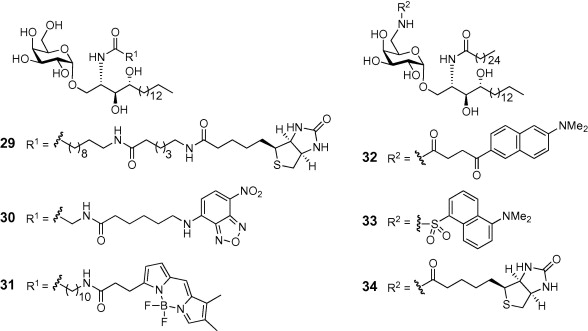 Trehalose diesters, lipoteichoic acids and α-GalCer: using
