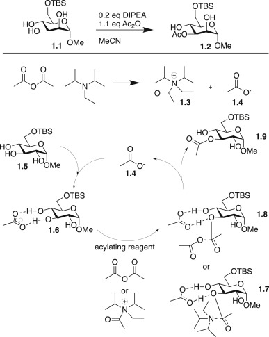 Recent Advances In Site Selective Functionalization Of Carbohydrates