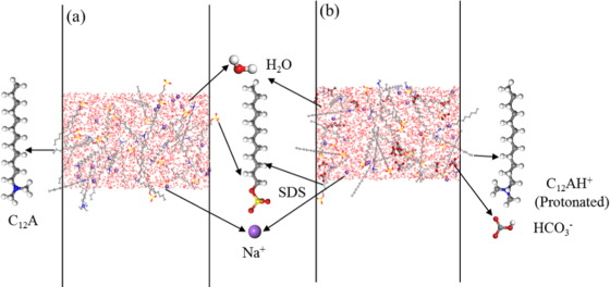 CO2/N2 switchable aqueous foam stabilized by SDS/C12A