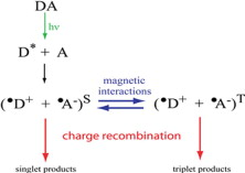 Comment on 'Spin-selective reactions of radical pairs act as