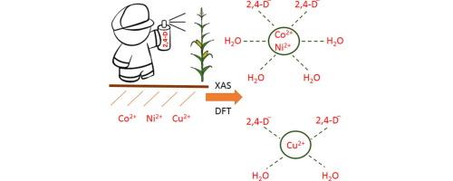 The Co(II), Ni(II) and Cu(II) complexes with herbicide 2,4