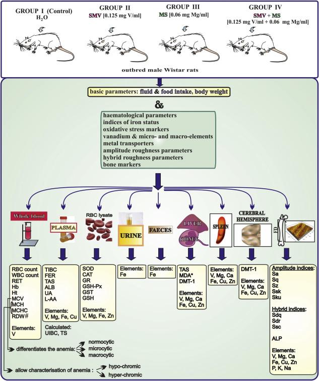 Vanadium (V) and magnesium (Mg) - In vivo interactions: A