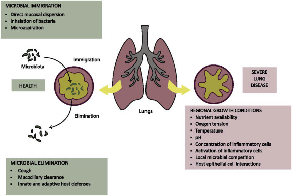 Particle-Lung Interactions, Second Edition: 241 (Lung Biology in Health and Disease)