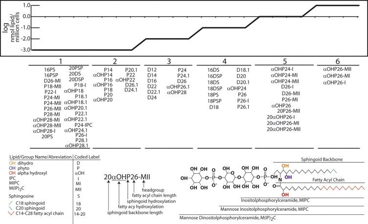 The yeast sphingolipid signaling landscape - ScienceDirect