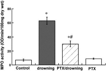 Pentoxifylline reduces indirect lung injury of fresh water