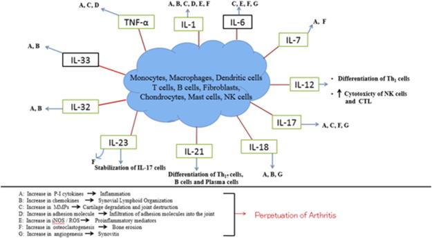 Understanding The Role Of Cytokines In The Pathogenesis Of Rheumatoid Arthritis Sciencedirect