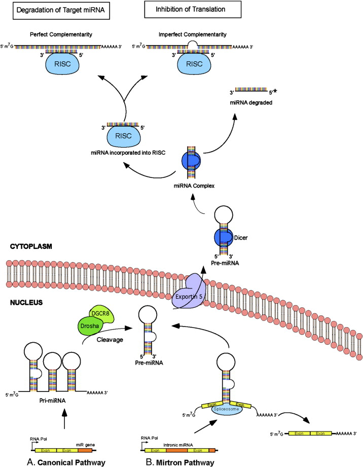 Molecular methods in electrochemical microRNA detection