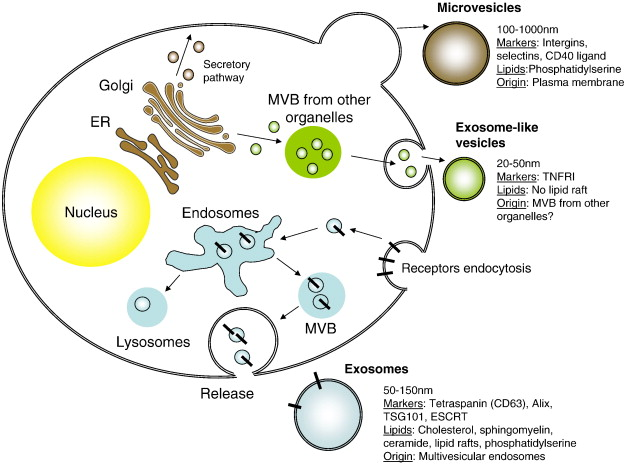 Are extracellular microRNAs involved in type 2 diabetes and