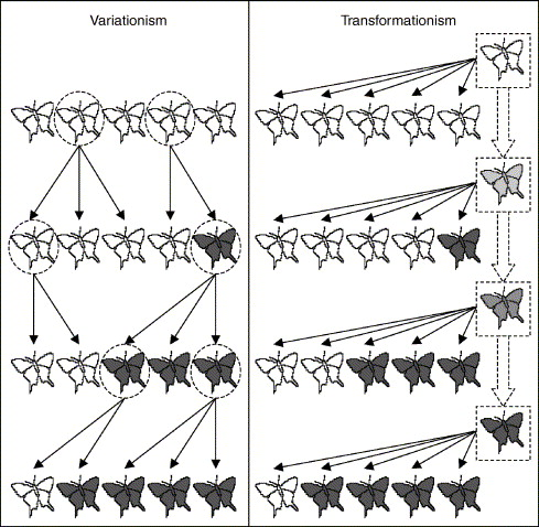 Qualitative differences between nave and scientific theories of illustration of the conceptual differences between variational and transformational theories of evolution in the context of moth evolution fandeluxe Images