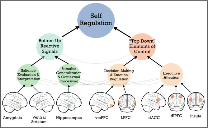 Self Regulation And Toxic Stress Report >> Poverty And Self Regulation Connecting Psychosocial Processes