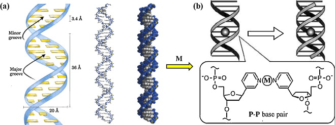 Supramolecular self assembly of nucleotidemetal coordination supramolecular self assembly of nucleotidemetal coordination complexes from simple molecules to nanomaterials sciencedirect ccuart Image collections