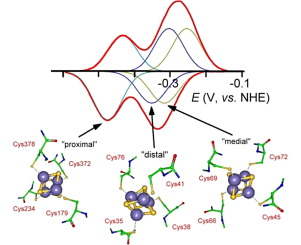Cyclic Voltammogram And Digitally Simulated Voltammetric Profiles Of The  [Math Processing Error] { [ Fe 4 S 4 ] ( S Cys γ ) 4 } Clusters Harbored By  U201c ...