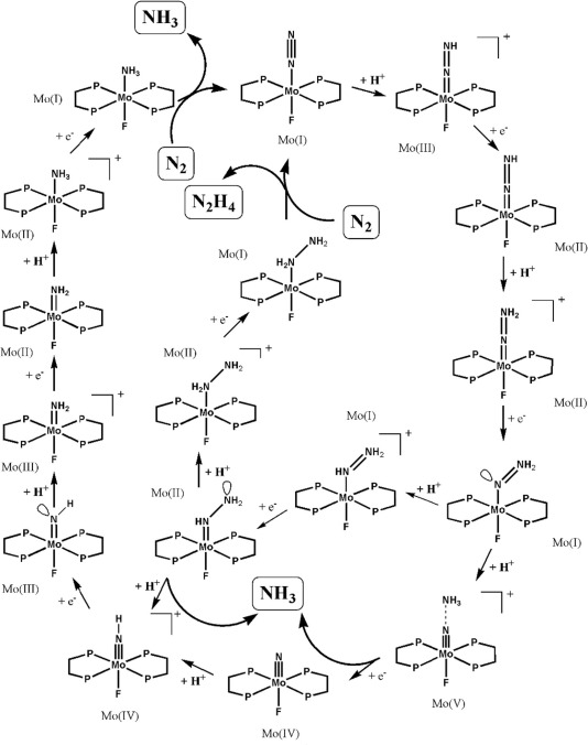 Synthetic Nitrogen Fixation With Mononuclear Molybdenum Complexes