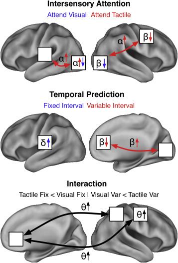 Distinct patterns of local oscillatory activity and