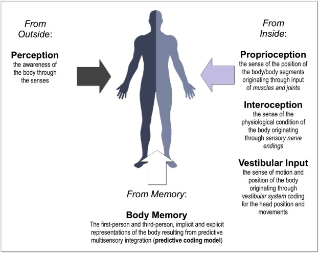 The Neuroscience Of Body Memory From The Self Through The Space To