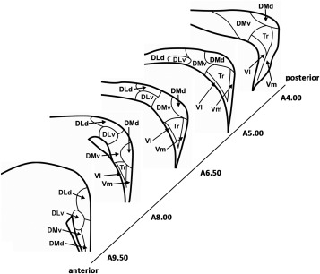 The Hippocampus Of Birds In A View Of Evolutionary