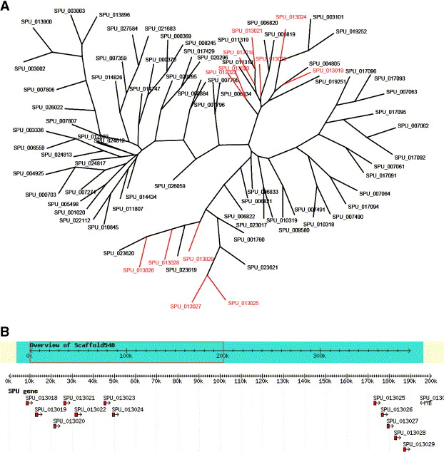 A Genomic View Of The Sea Urchin Nervous System Sciencedirect