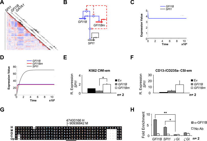 A somatic mutation of gfi1b identified in leukemia alters cell fate fig 4 ccuart Choice Image