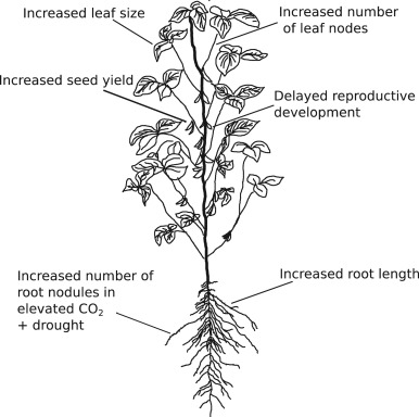Plant Developmental Responses To Climate Change Sciencedirect