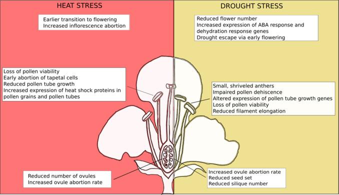 Plant developmental responses to climate change - ScienceDirect