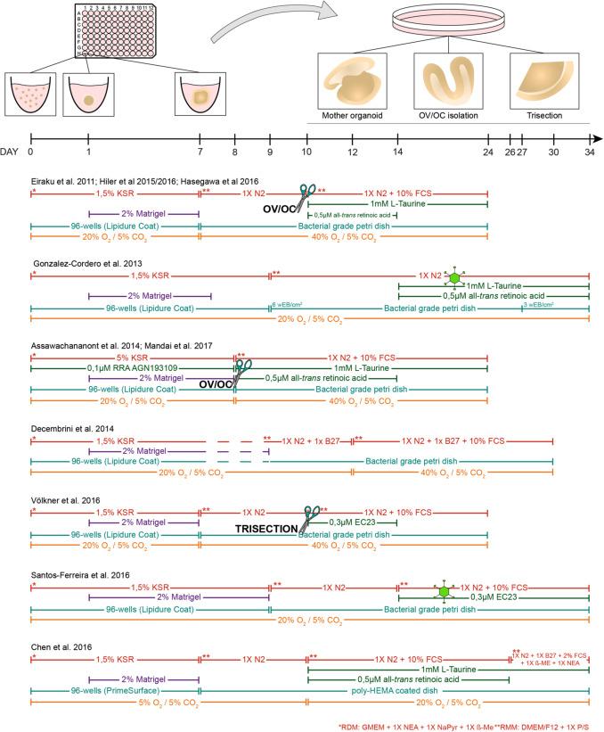 Organoid technology for retinal repair - ScienceDirect