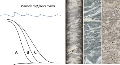 The rise of pinnacle reefs: A step change in marine