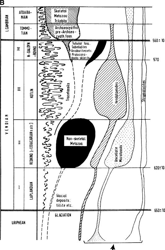 The Vendian (Ediacaran) in the geological record: Enigmas in