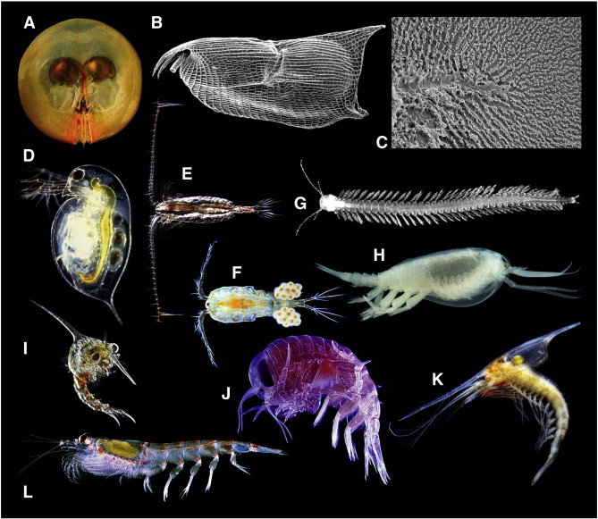 The Fossil Record And Palaeoenvironmental Significance Of Marine