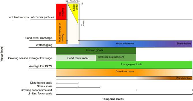 Feedbacks between the riparian Salicaceae and hydrogeomorphic