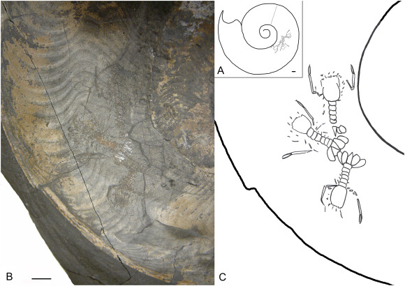 Predation in the marine fossil record: Studies, data, recognition