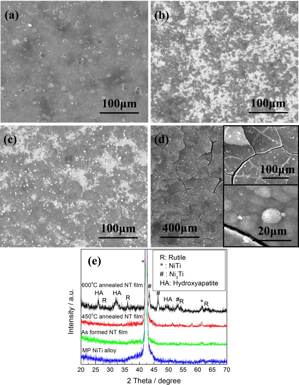 Preparation, characterization, corrosion behavior and bioactivity of