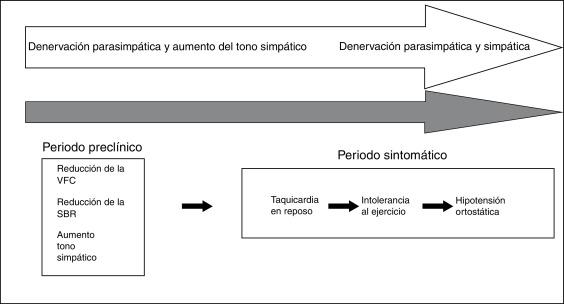 neuropatía autonómica cardiovascular y diabetes tipo 1