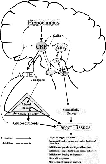 Neuroendocrine Pharmacology Of Stress