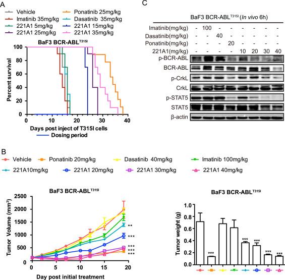 Shc004 221a1 A Novel Tyrosine Kinase Potently Inhibits T315i