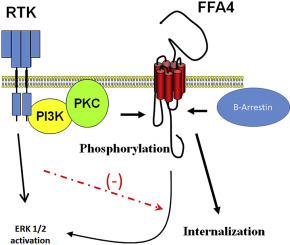 Receptor tyrosine kinase activation induces free fatty acid 4