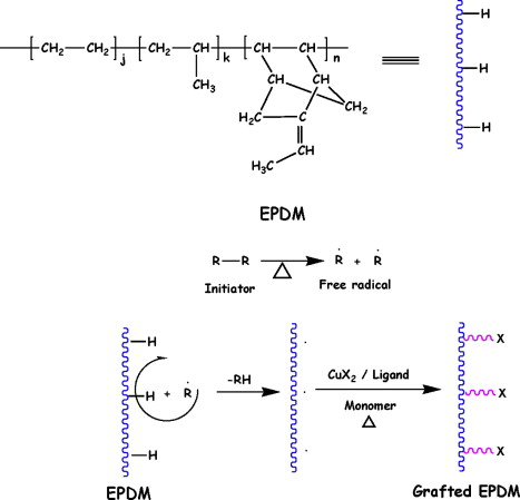 Polymethacrylate grafted epdm via reverse atom transfer radical schematic diagram of reverse atom transfer radical graft copolymerization ratrgp of methacrylates from epdm ccuart Gallery