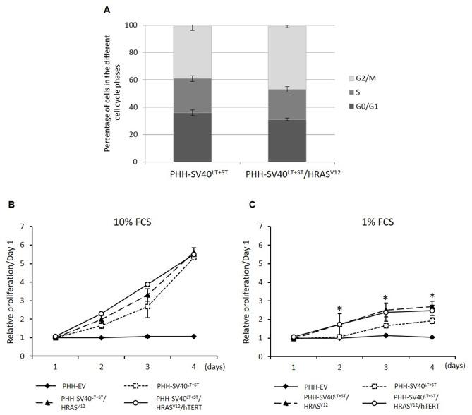 In vitro transformation of primary human hepatocytes
