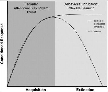 2 Two Hit Hypothesis Underlying Anxiety Vulnerability In Females This Is A Conceptual Model That Depicts The Proposed Of