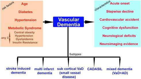 Models and mechanisms of vascular dementia - ScienceDirectScienceDirect.com
