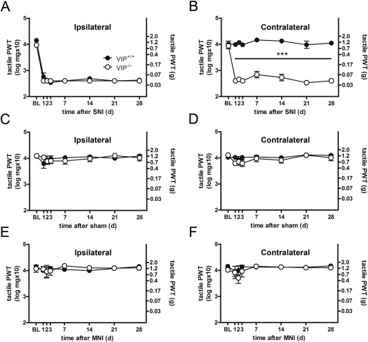 Bilateral tactile hypersensitivity and neuroimmune responses after