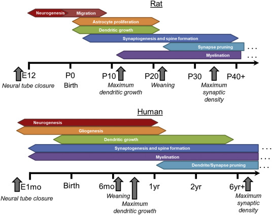 Bridging the gap: Mechanisms of plasticity and repair after