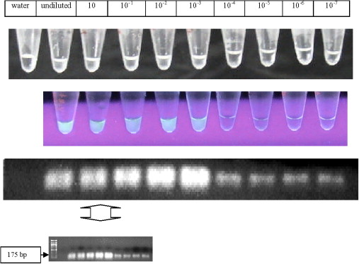 Rapid identification of Acanthamoeba from contact lens case