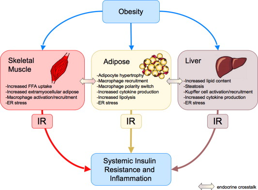 Inflammation and insulin resistance - ScienceDirect