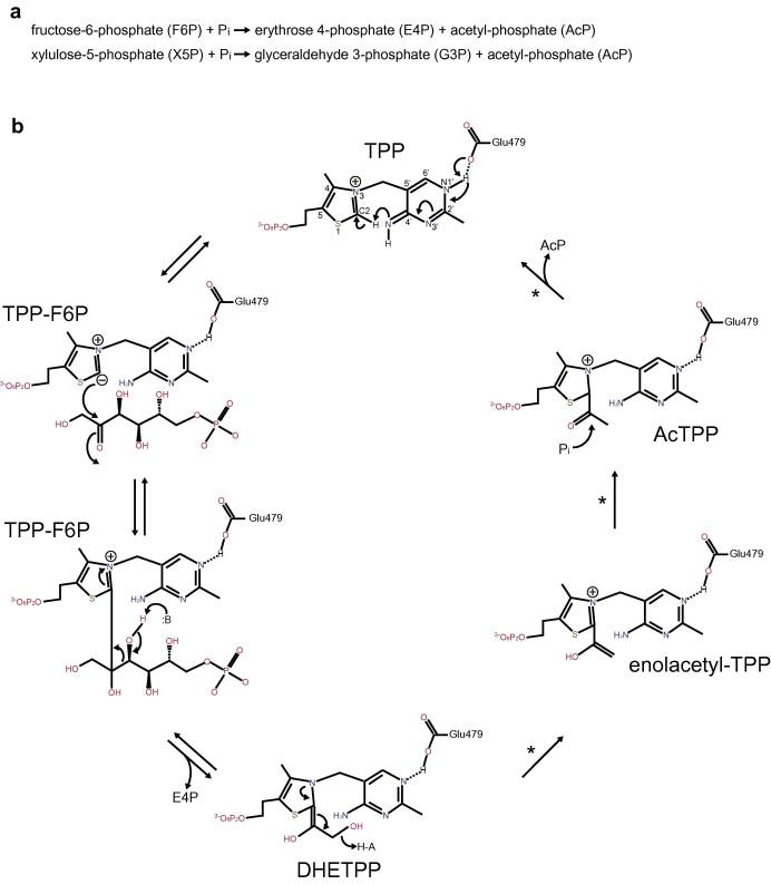 Crystal Structure Of Bifidobacterium Longum Phosphoketolase Key